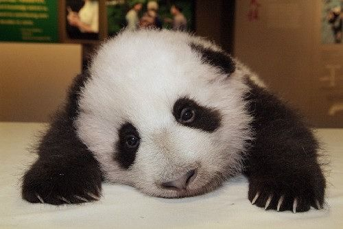 Letting users run code on your machine makes me a sad panda.