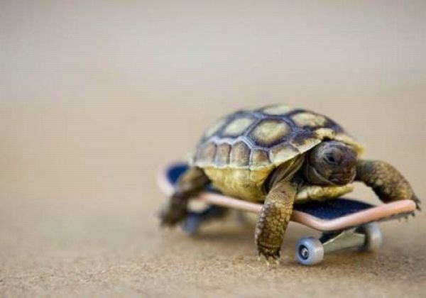 a turtle on a skateboard
